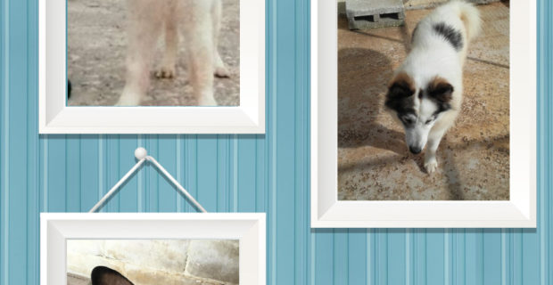 Happy Endings for Cotton, Eclair and Winston